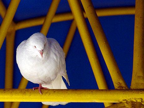 122204_white_bird