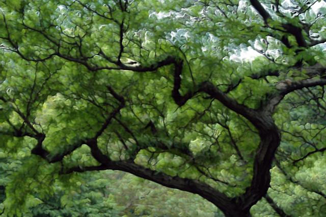 "tree.jpg"""
